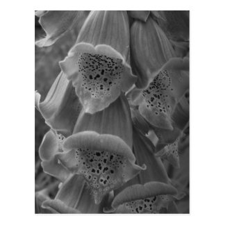 Maine_Black+White_114 Post Cards