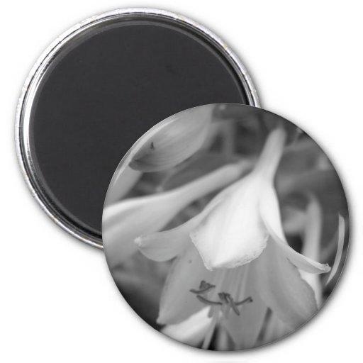 Maine_Black+White_154 Magnets