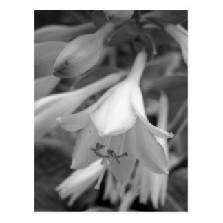 Maine_Black+White_154 Postcard