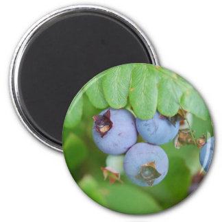 Maine blueberries magnet