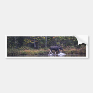 Maine Bull Moose Bumper Sticker