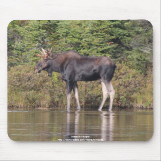 Maine Bull Moose Mouse Pad