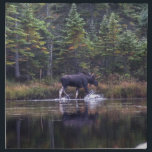 "Maine Bull Moose Napkin<br><div class=""desc"">Bull moose at Sandy Stream Pond in Baxter State Park in Maine</div>"