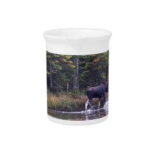 Maine Bull Moose Pitchers
