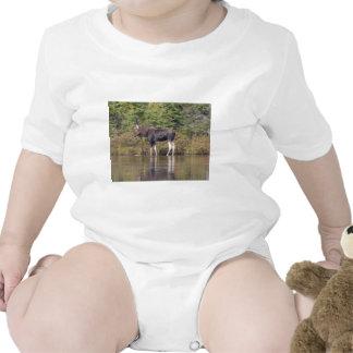 Maine Bull Moose T-shirts