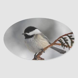 Maine Chickadee Oval Sticker