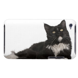 Maine Coon (15 months old) iPod Touch Cases