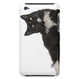 Maine Coon (15 months old) iPod Touch Covers