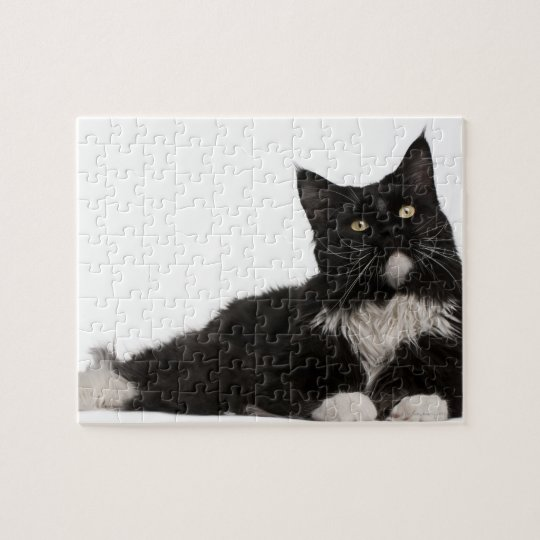 Maine Coon (15 months old) Jigsaw Puzzle