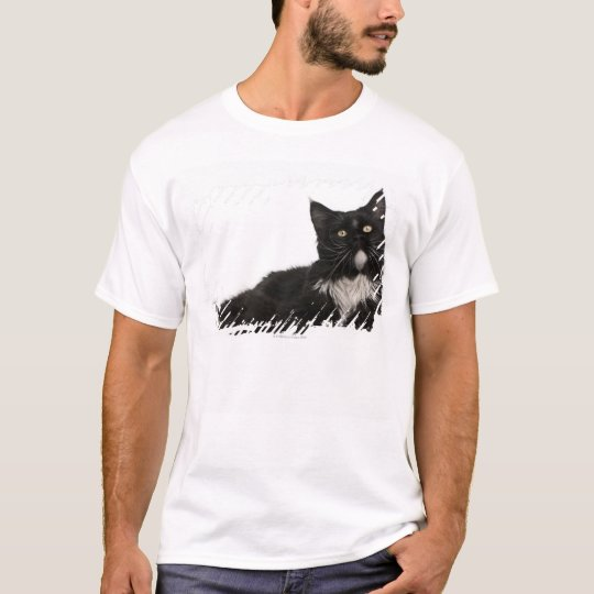 Maine Coon (15 months old) T-Shirt