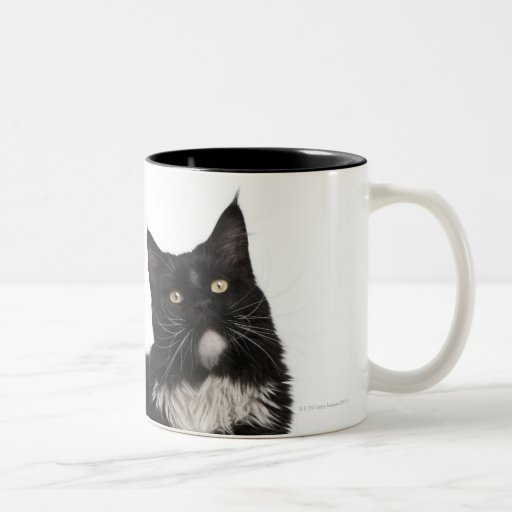 Maine Coon (15 months old) Two-Tone Coffee Mug