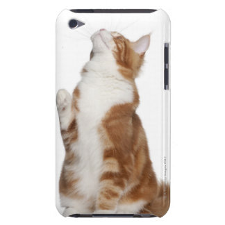 Maine Coon (6 months old) sitting and looking up iPod Touch Case-Mate Case