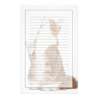 Maine Coon (6 months old) sitting and looking up Stationery