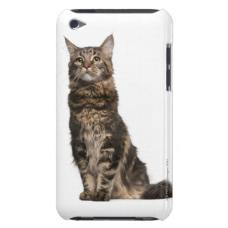 Maine Coon (8 months old) Barely There iPod Covers