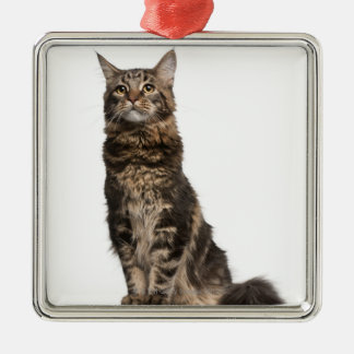 Maine Coon (8 months old) Metal Ornament