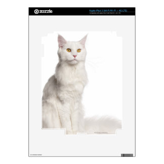 Maine Coon (8 months old) sitting iPad 3 Decal