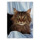 Maine Coon, brown tabby Greeting Card