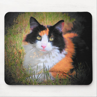 Maine Coon Calico Eyes Mouse Pad