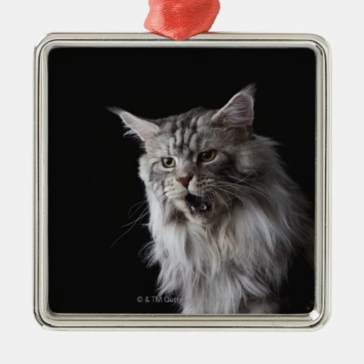 Maine Coon cat 2 Christmas Tree Ornaments