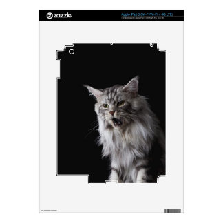 Maine Coon cat 2 iPad 3 Decals
