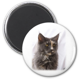 Maine Coon Cat 9Y825D-012 Refrigerator Magnet