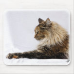 Maine Coon Cat 9Y825D-103 Mouse Pad