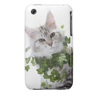 Maine Coon cat and ornament of ivy iPhone 3 Case-Mate Case