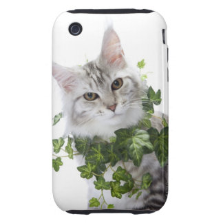 Maine Coon cat and ornament of ivy iPhone 3 Tough Case