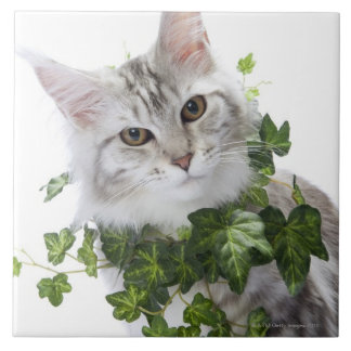 Maine Coon cat and ornament of ivy Large Square Tile