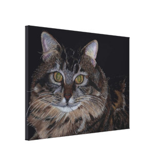 Maine Coon Cat Canvas Art