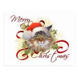 Maine Coon Cat Christmas Postcard