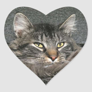Maine Coon cat face Heart Sticker