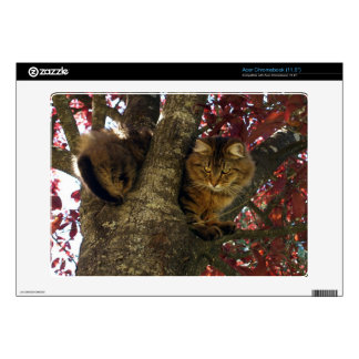 Maine Coon Cat in a Tree for Pet-lovers Decal For Acer Chromebook