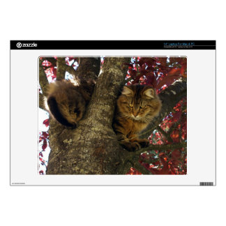 """Maine Coon Cat in a Tree for Pet-lovers Skins For 14"""" Laptops"""