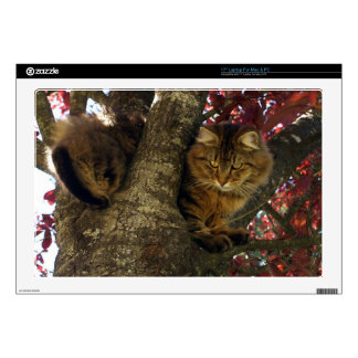 "Maine Coon Cat in a Tree for Pet-lovers Skin For 17"" Laptop"