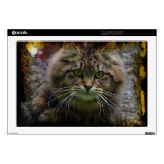 Maine Coon Cat in a Tree Portrait for Pet-lovers Laptop Decal