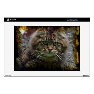 """Maine Coon Cat in a Tree Portrait for Pet-lovers Decal For 13"""" Laptop"""