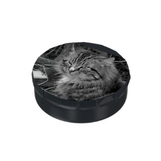 Maine Coon Cat in Winter Candy Tin