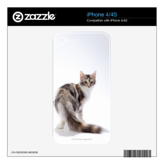 Maine Coon cat iPhone 4S Decal