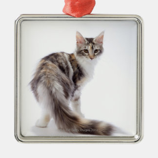 Maine Coon cat Metal Ornament