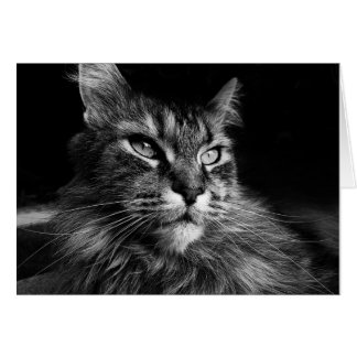 Maine Coon Cat notecard Stationery Note Card
