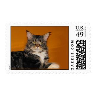 Maine Coon Cat on Orange Postage Stamps