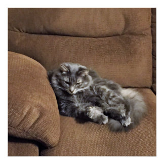 Maine Coon Cat on Sofa Poster