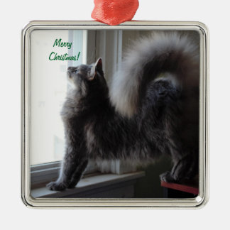 Maine Coon Cat Photo Metal Ornament