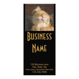 Maine Coon Cat Photograph Rack Card
