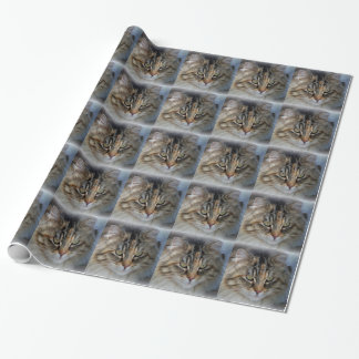 Maine Coon Cat Portrait Wrapping Paper