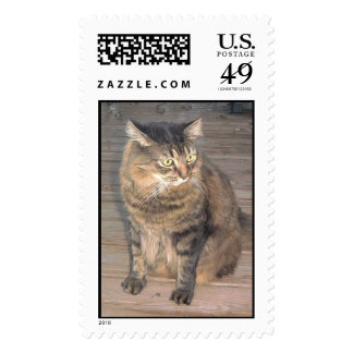 Maine Coon Cat Stamp