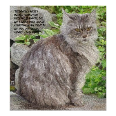 maine coon cat. Maine Coon Cat Prints and