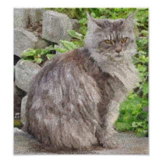 Maine Coon Cat Prints Posters