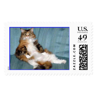 Maine Coon Cat Sitting Pretty Stamp